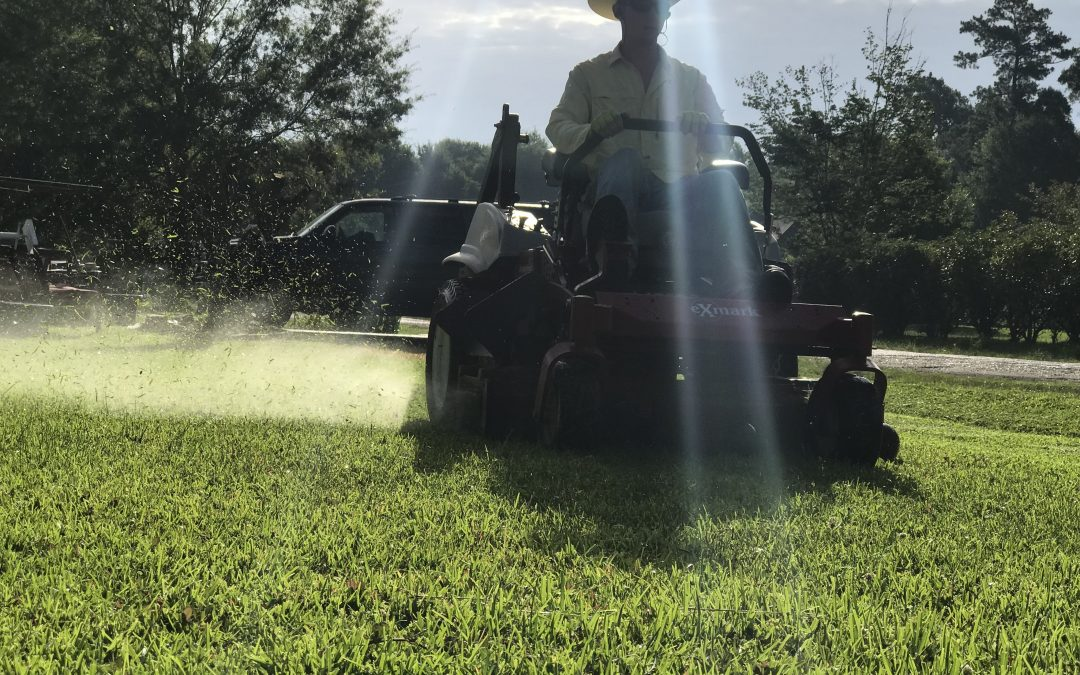 Best 5 Lawn Care Services in the Golden Triangle (Beaumont, Port Arthur, and Orange)