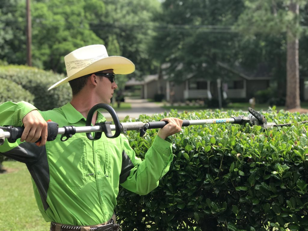 Hedge Trimming Golden Triangle