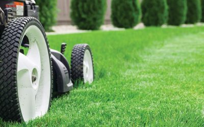 How to Care For Your Lawn during Spring in Texas