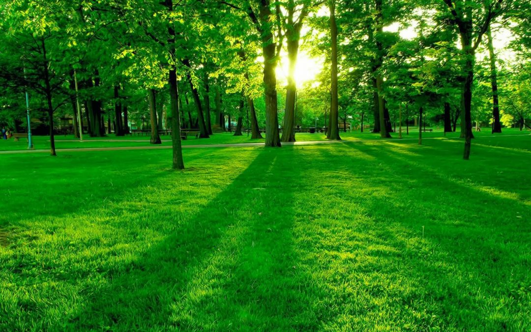 Keep Your Lawn Green in the Hot Texas Summers